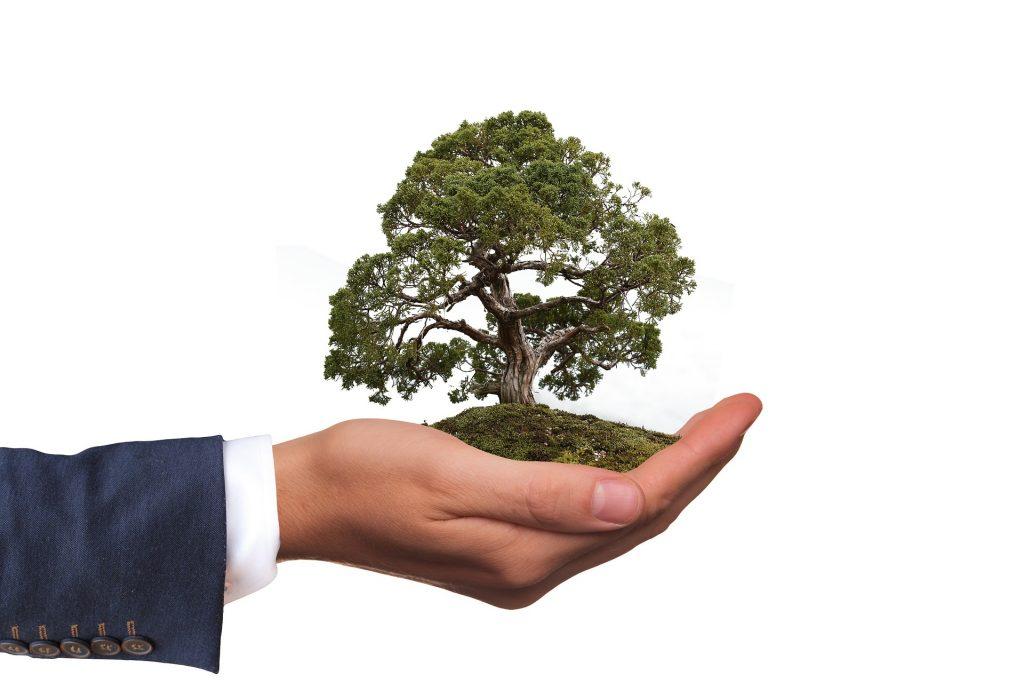 photo of a man holding a tree - eco friendly